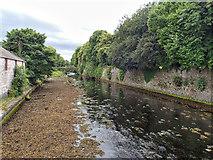 D3115 : Glenarm River by Mick Garratt