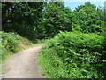 NZ1357 : Footpath and Seat in Chopwell Wood by Anthony Foster