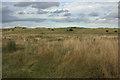 NZ2796 : Sand Dunes, Druridge by Mark Anderson