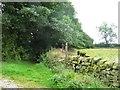 SK3357 : Public footpath heading south from Cowley Farm, Lea by Christine Johnstone
