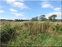 NU2314 : Bridleway between fields by Graham Robson