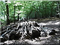 TQ2790 : Logs piles up in Coldfall Wood by Marathon