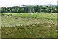 SX8376 : Fields near Heathfield by Alan Hunt