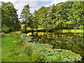SK4563 : Row Pond, Hardwick Hall by David Dixon