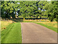 SK4664 : Hardwick Hall Driveway by David Dixon