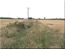 TR3156 : Former level crossing over East Kent Light Railway by Hugh Craddock
