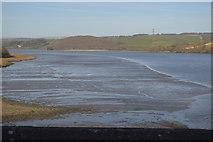 SX4561 : Mud, River Tavy by N Chadwick