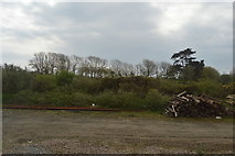 SW6138 : By the Cornish Main Line by N Chadwick