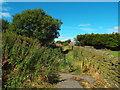 SE0626 : Path near Rye Lane, Halifax by Malc McDonald