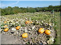 TQ8038 : Pumpkins in the vegetable garden at Sissinghurst Castle by Marathon