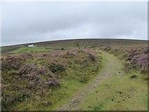 SX6781 : Track on Dartmoor near Warren House Inn by David Smith