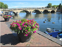 SU7682 : Floral display by the River Thames, Henley by Peter S