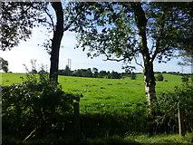 H5472 : Trees, Bracky by Kenneth  Allen