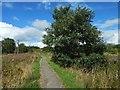 NS3976 : Turkey Oak beside footpath by Lairich Rig