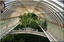 TQ1876 : View along the top of the Palm House from the upstairs balcony by Robert Lamb