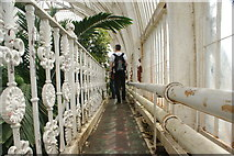 TQ1876 : View along the balcony at the top of the Palm House by Robert Lamb