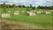 SO8844 : Replanted trees in Croome Park by Philip Halling