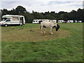 SP3070 : Early arrivals, Kenilworth Horse Fair camping by Robin Stott