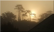 SX9065 : Trees, mist and sun, Torre by Derek Harper