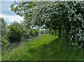 SK7492 : Cuckoo Way heading west along the Chesterfield Canal by Mat Fascione