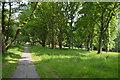 TQ5738 : Footpath, Tunbridge Wells Common by N Chadwick