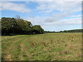TL3071 : St Ives to Hemingford Grey by John Sutton