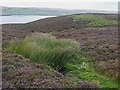 HU4545 : Moorland by the Burn of Kebister by Julian Paren