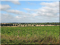 TL5055 : Towards Cambridge from Limepit Hill by John Sutton