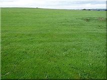 SE1187 : Middleham Low Moor, eastern end by Christine Johnstone