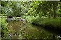 NZ0283 : River Wansbeck south of Wallington Hall by Christopher Hilton