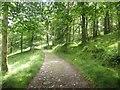 NY3104 : Footpath through Baysbrown Wood by Graham Robson