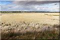 W8069 : Salt marsh on the north coast by David P Howard