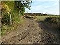 SO8740 : Farm track near Sudeley Farm by Philip Halling