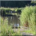 SP2964 : Resident heron, Kingfisher Pool, Myton Fields, southeast Warwick by Robin Stott