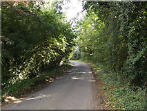 TM1491 : Low Common Road, Aslacton by Adrian Cable