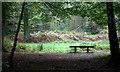 SU9295 : Penn Wood by Robert Eva