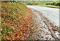 J3268 : Autumn leaves, Minnowburn, Belfast - October 2016(1) by Albert Bridge