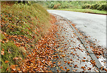 J3268 : Autumn leaves, Minnowburn, Belfast - October 2016(1) by Albert Bridge