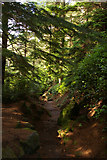 NU0702 : Cragside: top of the steps down to the house from Nelly's Moss by Christopher Hilton