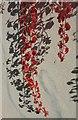 ST5874 : Virginia creeper, Redland by Derek Harper