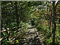NS3881 : Steps beside footbridge by Lairich Rig