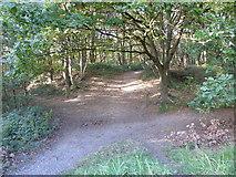 SJ8149 : Path junction near Wood Lane by Jonathan Hutchins