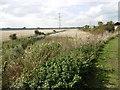 TQ9664 : The Saxon Shore Way near Conyer Creek by Marathon