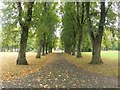NZ2467 : Autumn colours, Gosforth Central Park by Graham Robson
