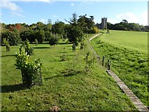 SO8845 : The Evergreen Shrubbery and ha-ha, Croome Park by Philip Halling