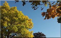 SX9065 : Leaves, Cricketfield Road by Derek Harper