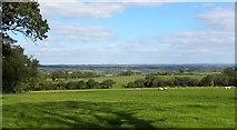SN0105 : Green pastures near Mount Pleasant by Gordon Hatton