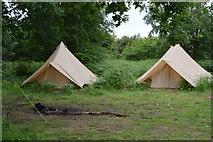 TQ5245 : Tent, Penshurst Park by N Chadwick