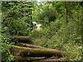 SO2812 : Obstructed footpath in Glebe Wood by Trevor Littlewood