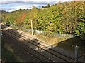 SJ8451 : Autumn foliage by the WCML south of Kidsgrove by Jonathan Hutchins